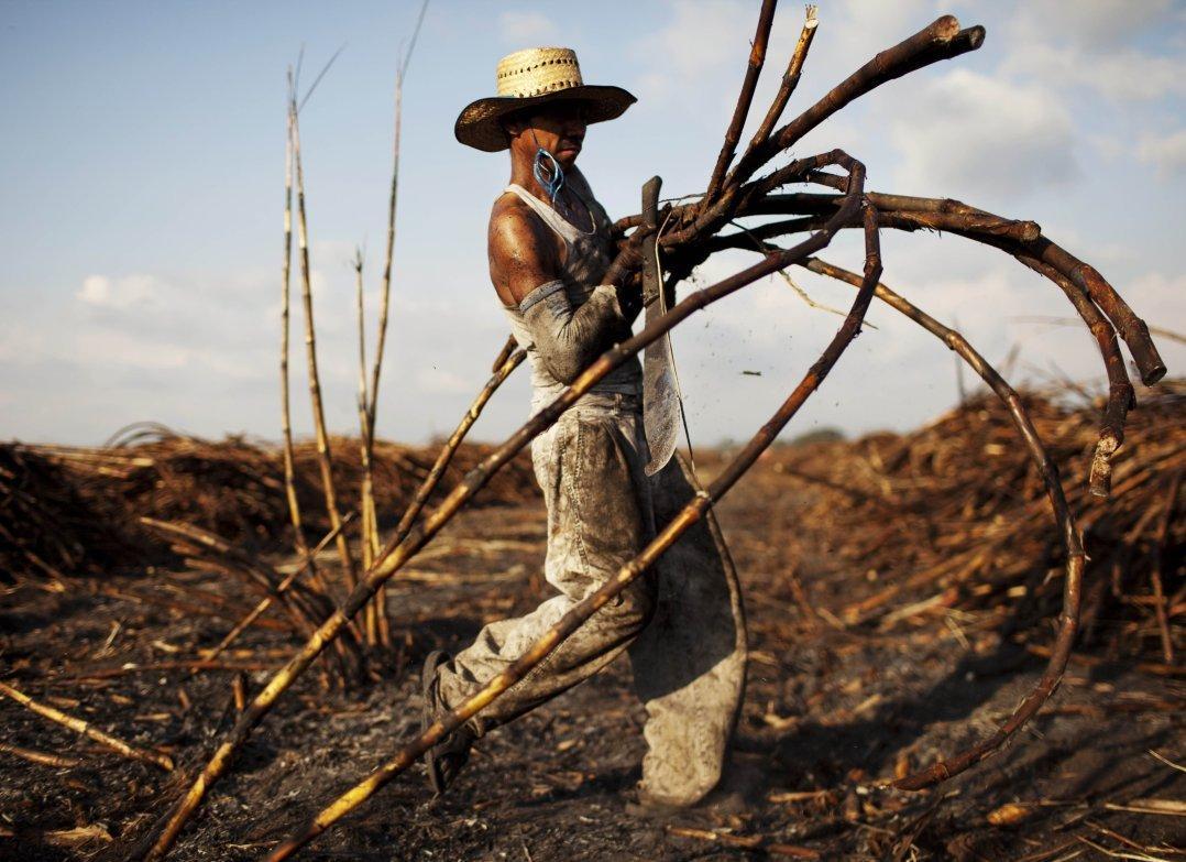 Sugarcaneharvest